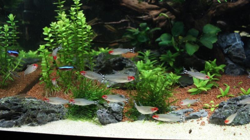 Mon aquarium 400 litres (vidéo page 5) - Page 6 Img_5020