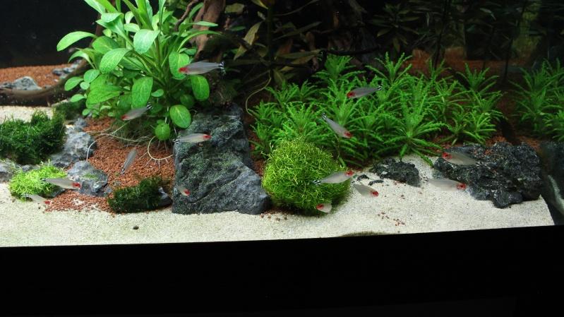 Mon aquarium 400 litres (vidéo page 5) - Page 6 Img_5021