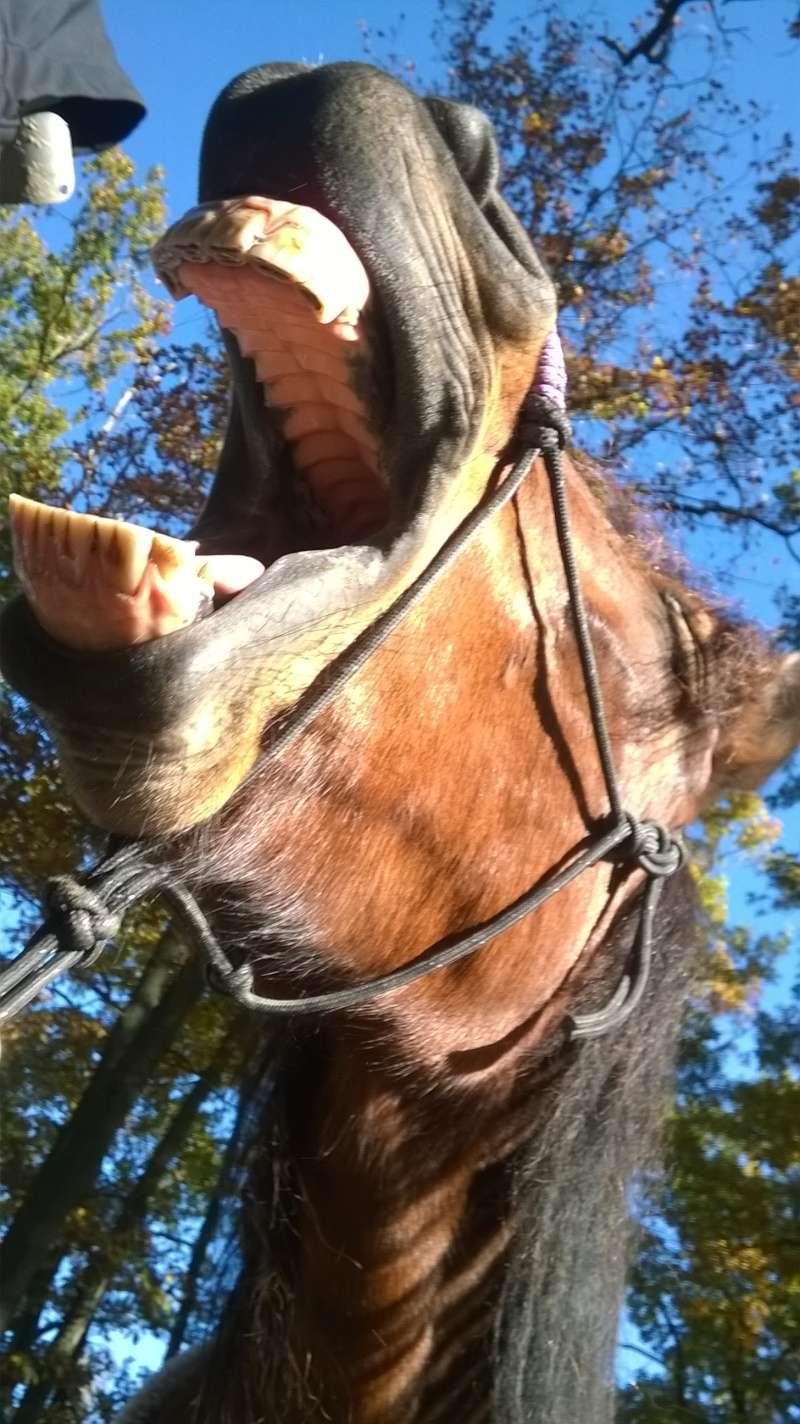 Des grimaces de cheval : venez voter  Wp_20112