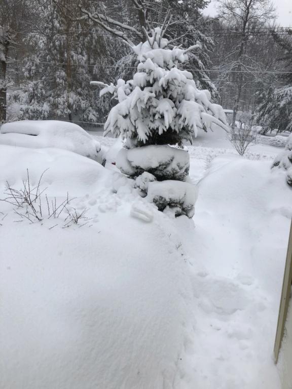 Post snow totals for Jan 31-Feb 2 2021 storm D6bac810