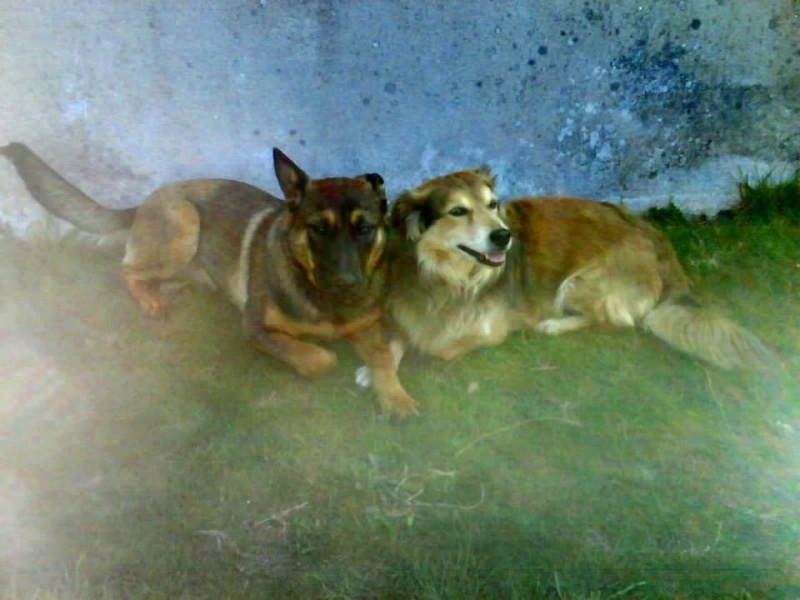 Mes chiens... 15268810