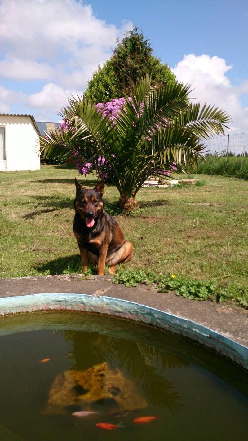 Mes chiens... Dsc_0912