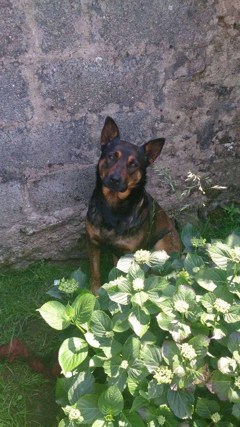 Mes chiens... Dsc_0913