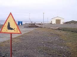 Les dauphins sont les zèbres de l'océan Images31