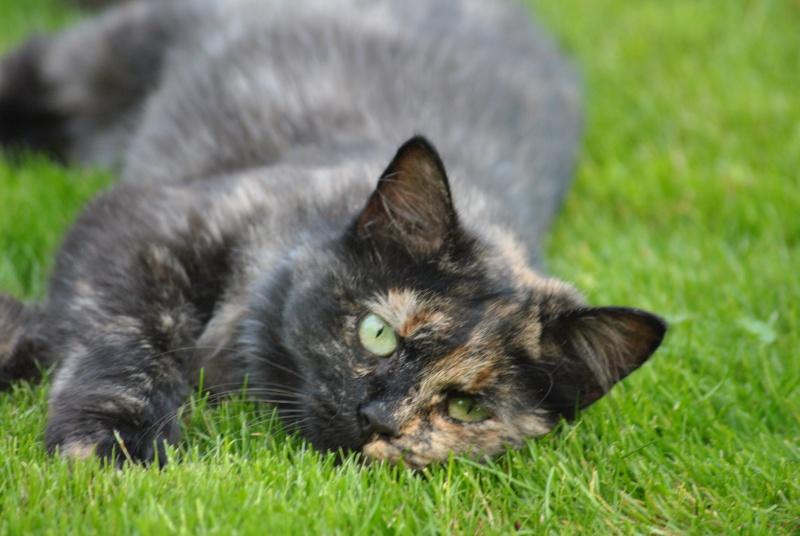 Kitty Cat, née le 1er août 2010 STATUT :CHAT LIBRE Dsc_0011
