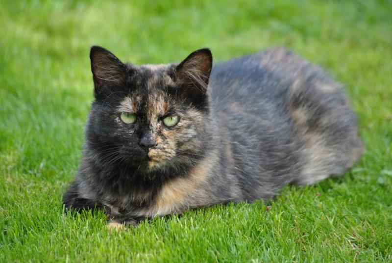 Kitty Cat, née le 1er août 2010 STATUT :CHAT LIBRE Dsc_0012