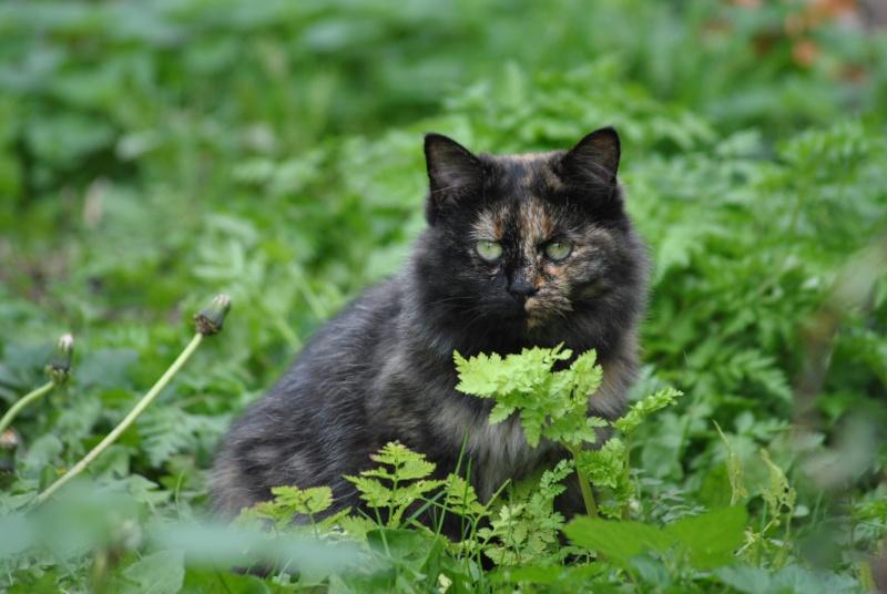 Kitty Cat, née le 1er août 2010 STATUT :CHAT LIBRE Dsc_0013