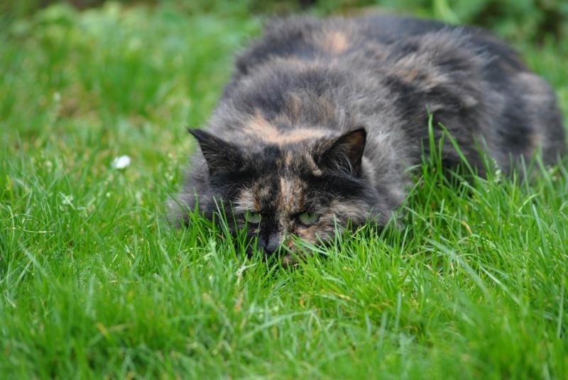 Kitty Cat, née le 1er août 2010 STATUT :CHAT LIBRE Dsc_0019