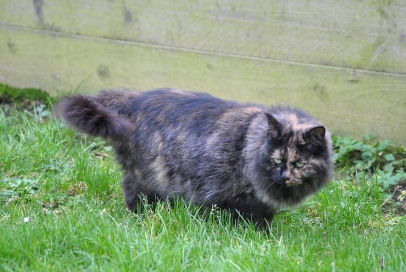 Kitty Cat, née le 1er août 2010 STATUT :CHAT LIBRE Dsc_0022
