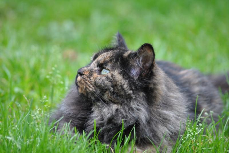 Kitty Cat, née le 1er août 2010 STATUT :CHAT LIBRE Dsc_0024
