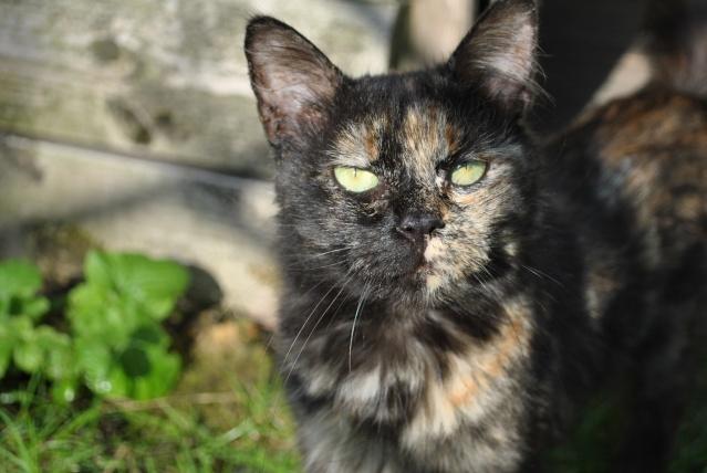 Kitty Cat, née le 1er août 2010 STATUT :CHAT LIBRE Dsc_0210