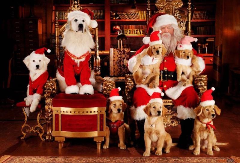 Joyeux Noël ! 10133410