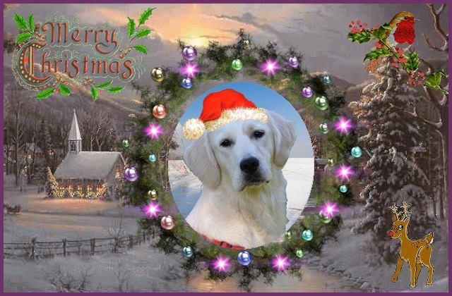 Concours photos de vos chiens, chats à l'occasion des fêtes de fin d'année - Page 2 12380410