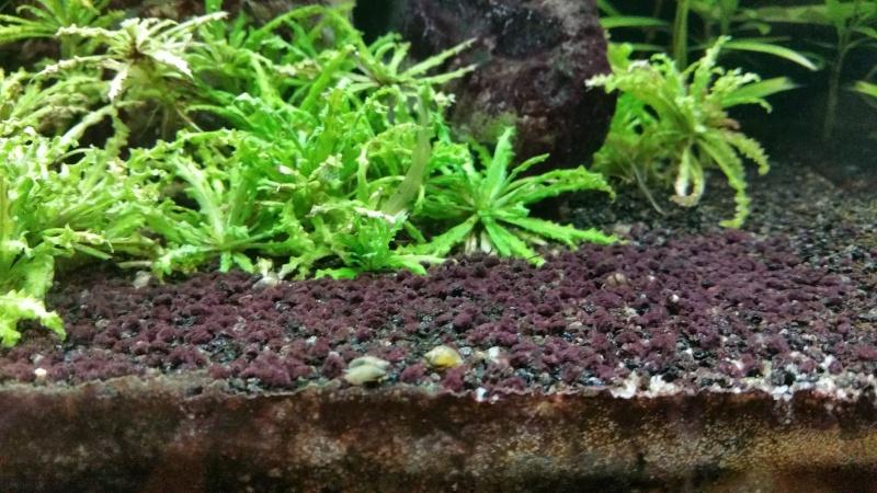 Problème algues brune ? 20151211