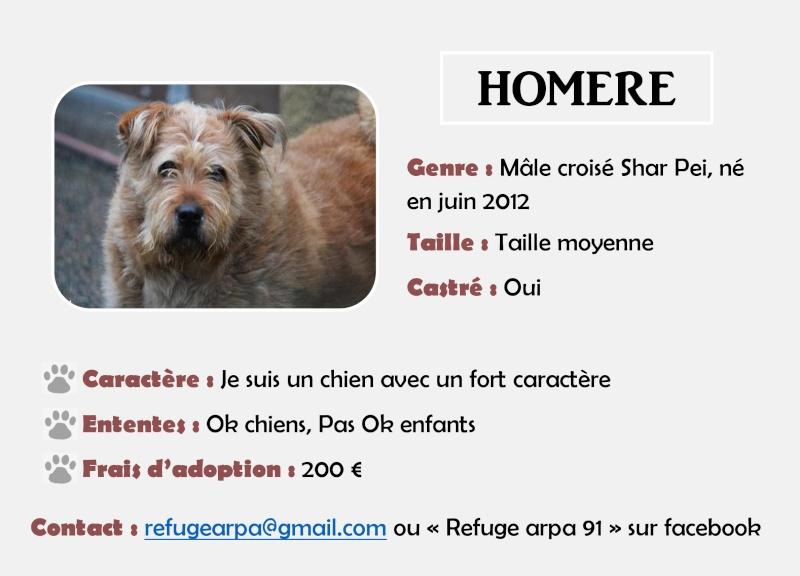 HOMERE  -  croisé Griffon/ sharpeï  roux 7 ans (6 de refuge)   -  ARPA  A  RIS  ORANGIS  (91) Homere10