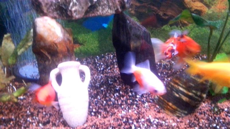 Mon aquarium de 300l 55510