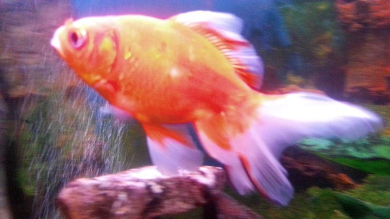 Mon aquarium de 300l Baku10