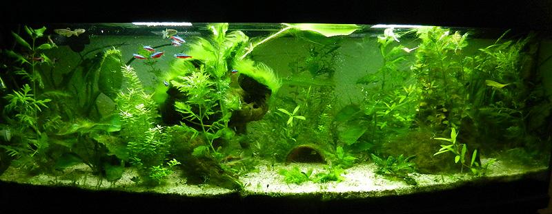 Mon aquarium de A à Z... C'est fini :( - Page 9 Dscn4210