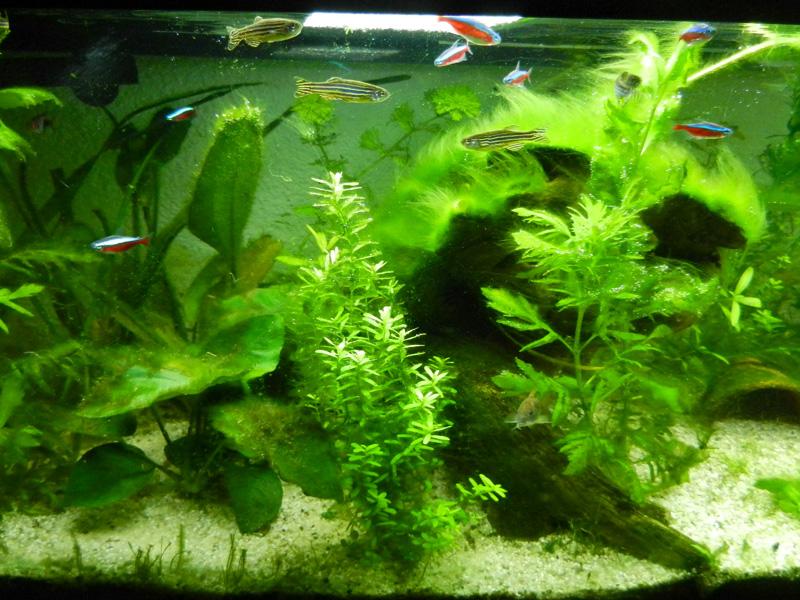 Mon aquarium de A à Z... C'est fini :( - Page 9 Dscn4211