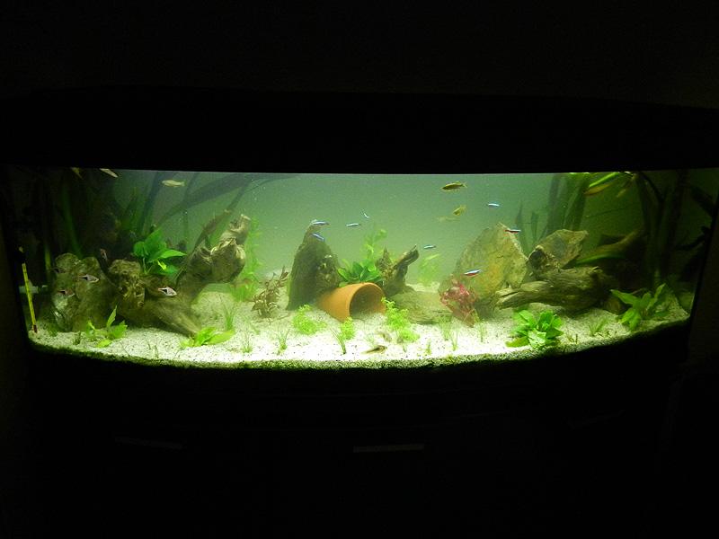 Mon aquarium de A à Z... C'est fini :( - Page 10 Dscn4212