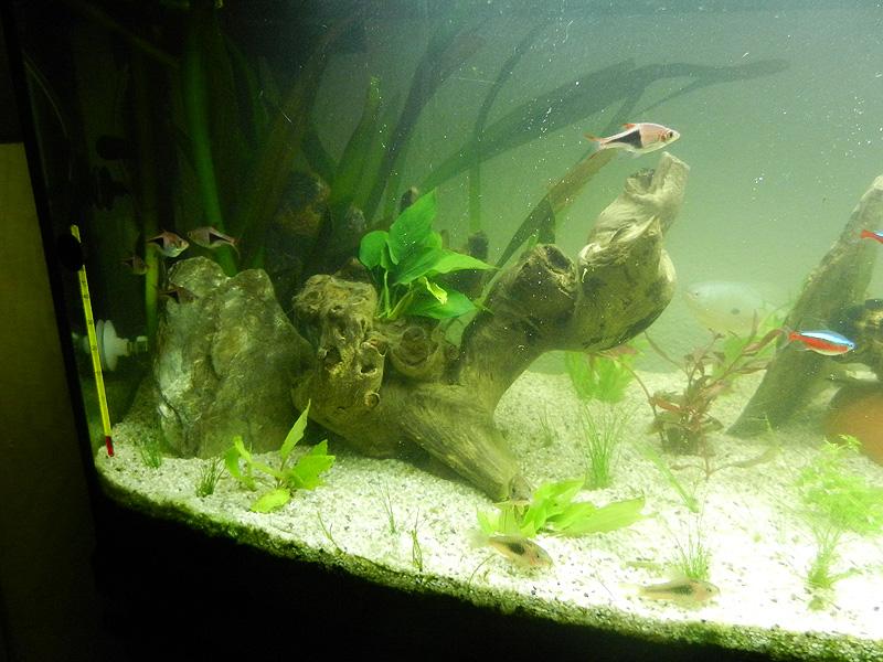 Mon aquarium de A à Z... C'est fini :( - Page 10 Dscn4213