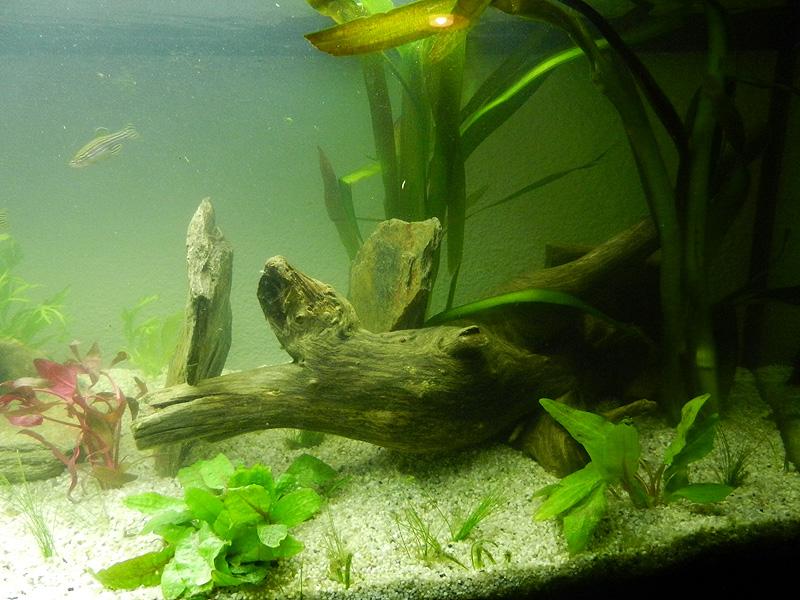 Mon aquarium de A à Z... C'est fini :( - Page 10 Dscn4214