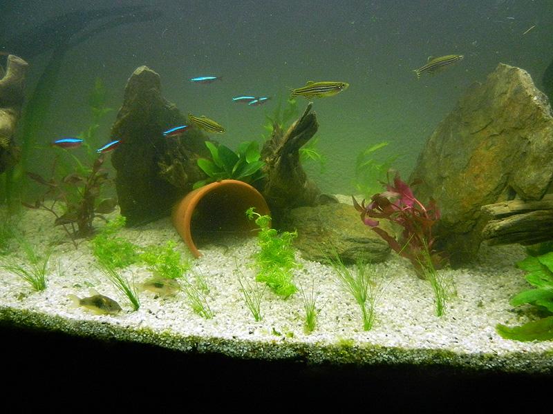 Mon aquarium de A à Z... C'est fini :( - Page 10 Dscn4215