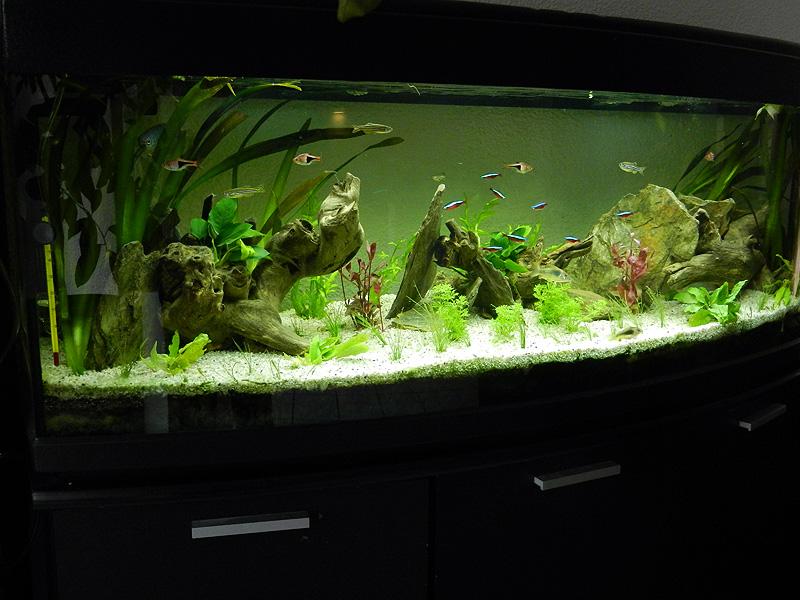 Mon aquarium de A à Z... C'est fini :( - Page 10 Dscn4216