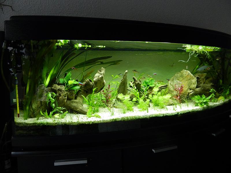 Mon aquarium de A à Z... C'est fini :( - Page 10 Dscn4217