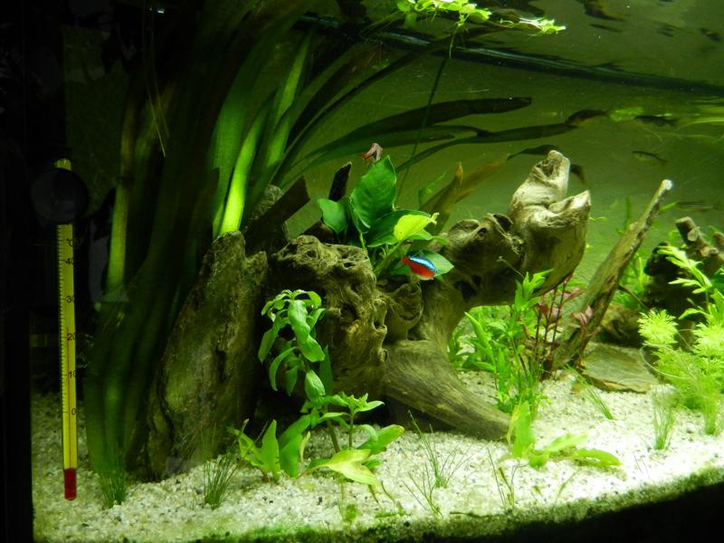 Mon aquarium de A à Z... C'est fini :( - Page 10 Dscn4218
