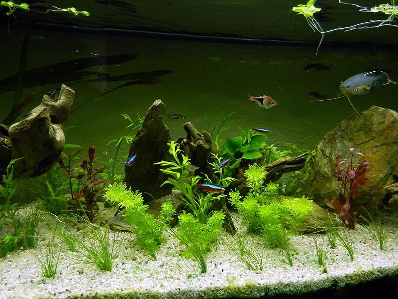 Mon aquarium de A à Z... C'est fini :( - Page 10 Dscn4220