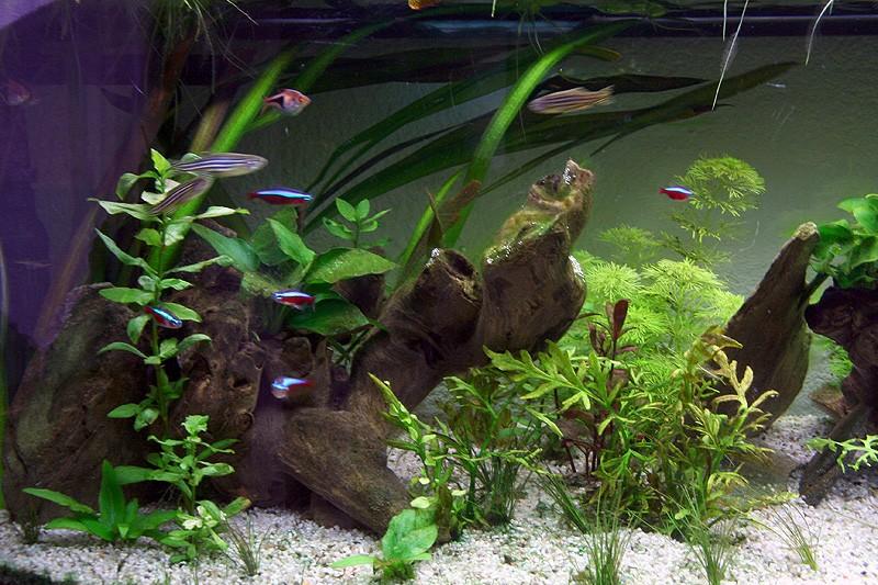 Mon aquarium de A à Z... C'est fini :( - Page 10 Img_9013