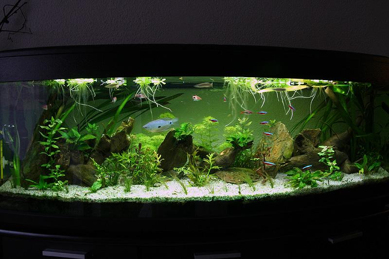 Mon aquarium de A à Z... C'est fini :( - Page 10 Img_9110