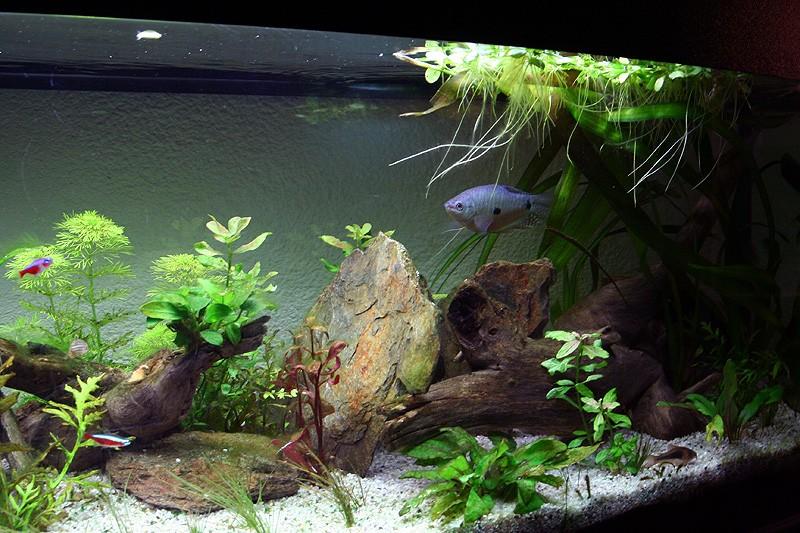 Mon aquarium de A à Z... C'est fini :( - Page 10 Img_9111