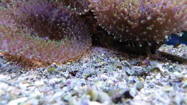 Mon premier aquarium - Page 4 20151110