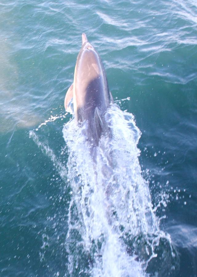 [Photos] Rencontre avec les cétacés de Monterey Bay Img_7910