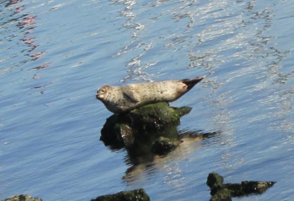 [Photos] Rencontre avec les cétacés de Monterey Bay Img_8010