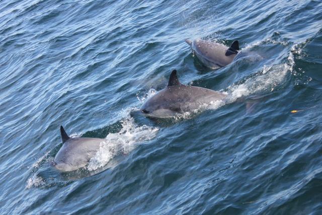 [Photos] Rencontre avec les cétacés de Monterey Bay Img_8012