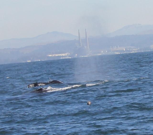 [Photos] Rencontre avec les cétacés de Monterey Bay Img_8014