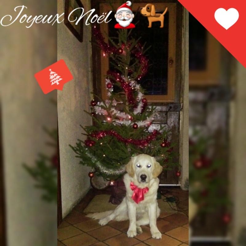 Concours photos de vos chiens, chats à l'occasion des fêtes de fin d'année - Page 2 Square11