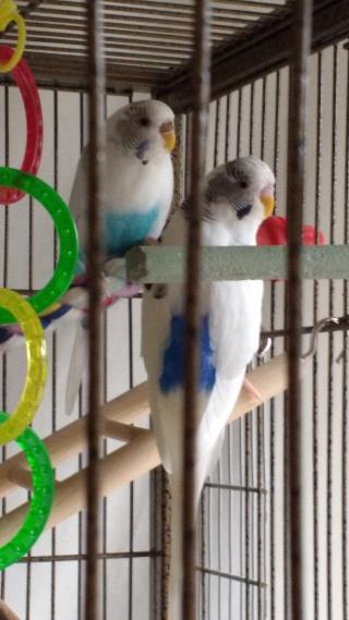 Voici mes petites bêtes :) Img_2011