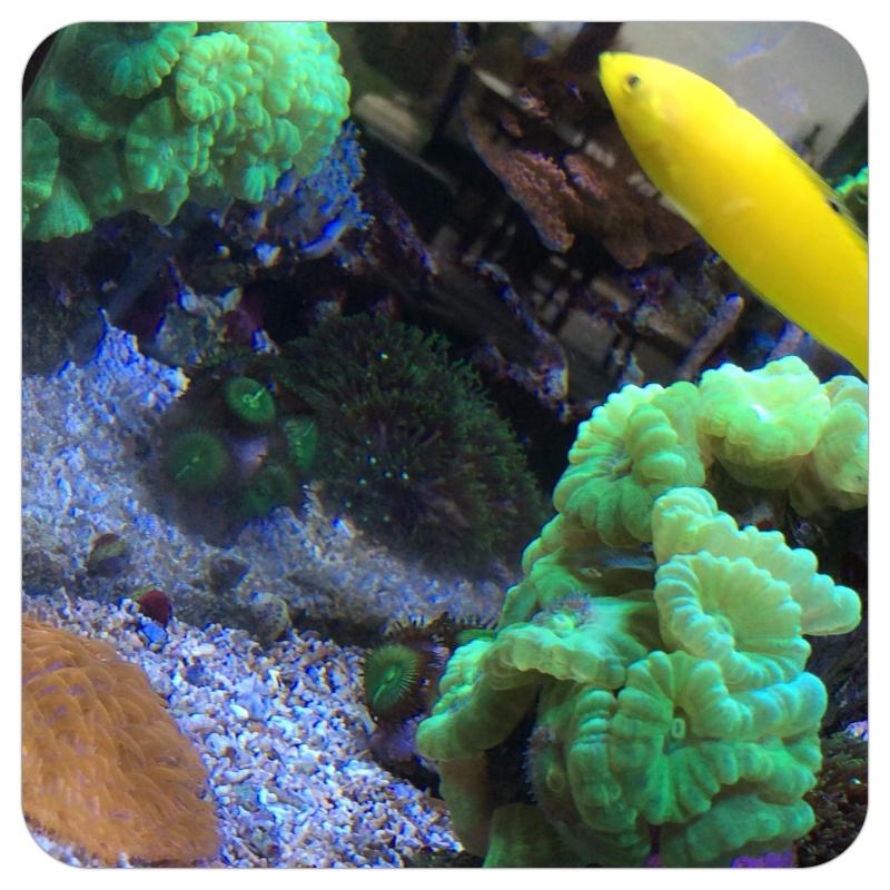 Juste comme ça: les polypes ouvert  Image10