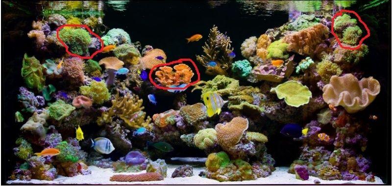 Bacs à coraux mous Captur10