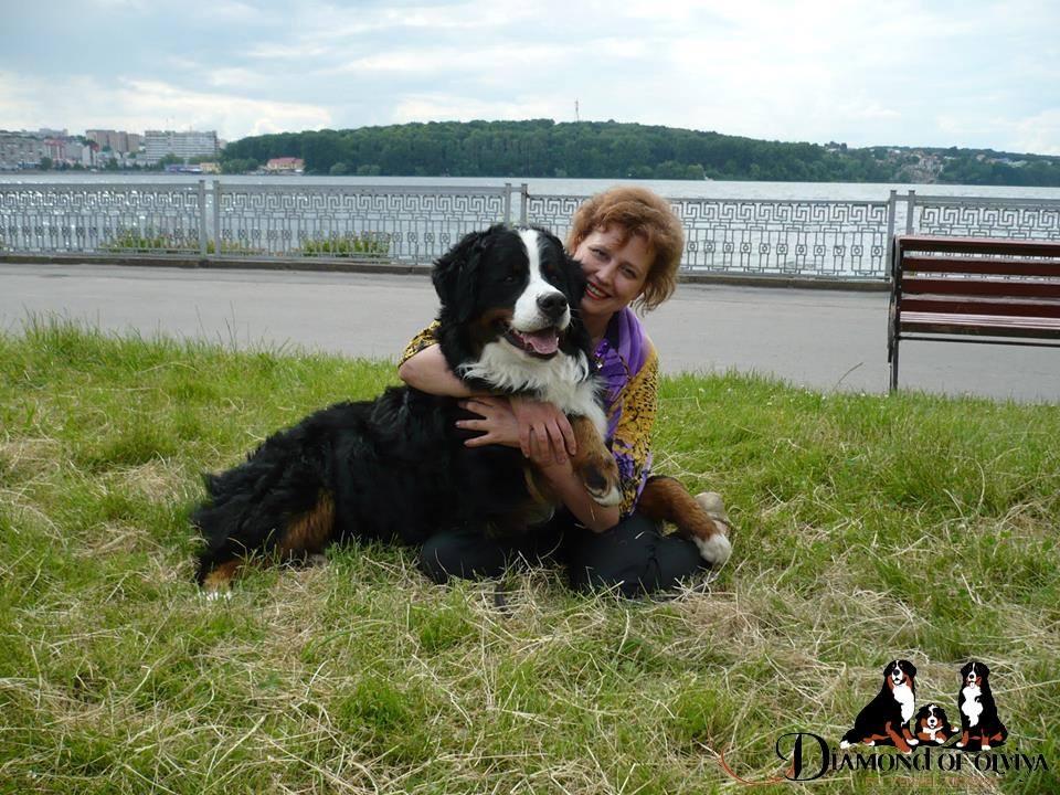 Бернский зеннненхунд - собака с сердцем льва и душой человека 12270411