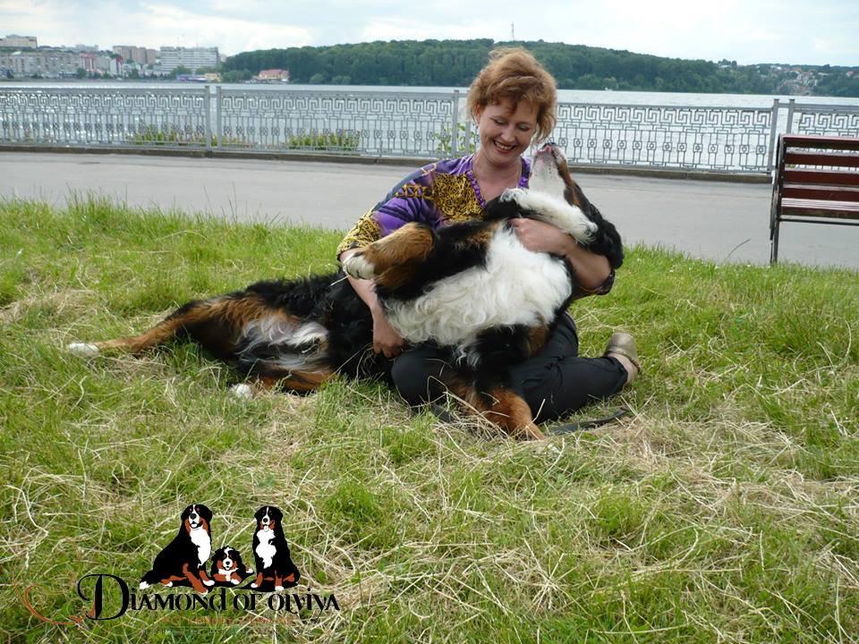 Бернский зеннненхунд - собака с сердцем льва и душой человека 12286010