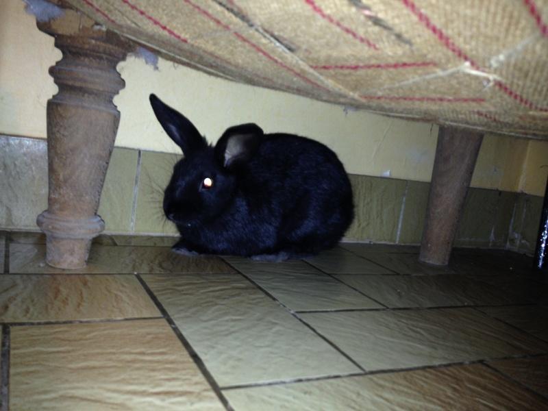 PETIT MARCEL bébé lapin mâle V_039912