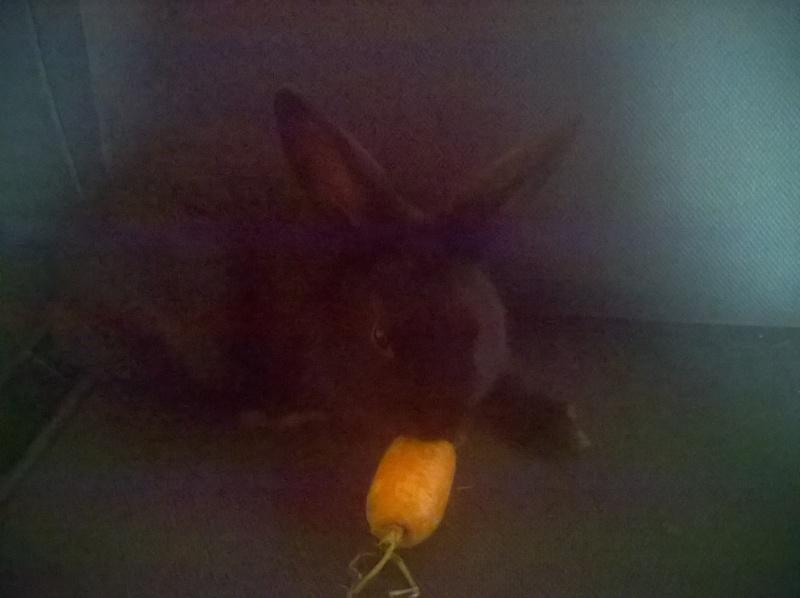 PETIT MARCEL bébé lapin mâle Wp_20114