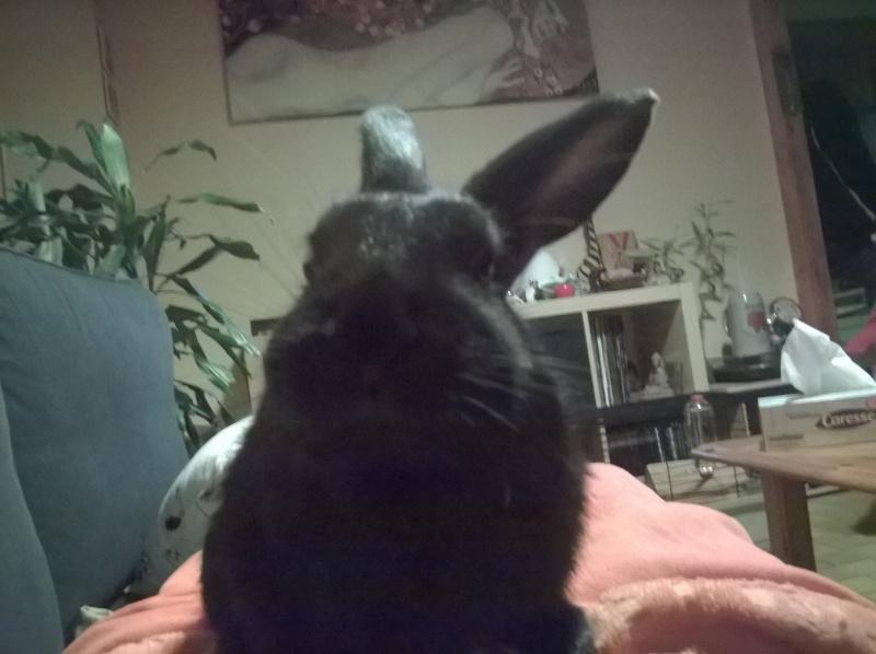 PETIT MARCEL bébé lapin mâle Wp_20120