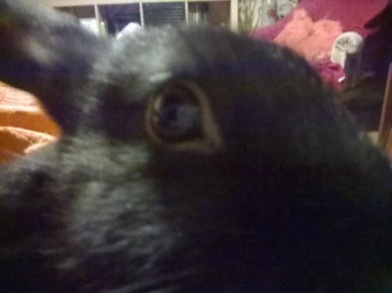 PETIT MARCEL bébé lapin mâle Wp_20121