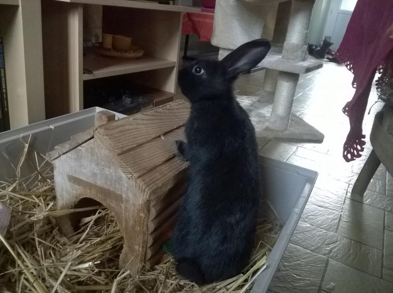 PETIT MARCEL bébé lapin mâle Wp_20123